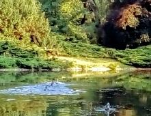 Park im. księcia Józefa Poniatowskiego w Łodzi. Kiepsko widać, ale na wodzie kaczuszki rozrabiają.