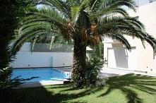 W sąsiedztwie palmy.