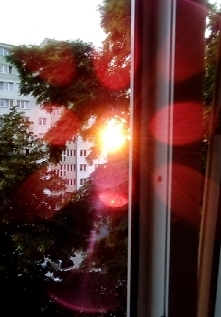 Słońce to kwiat ;-)