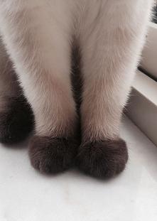 Kocie łapki :)