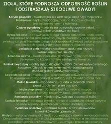zioła które podnoszą odporn...