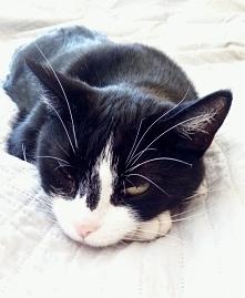 Babadook czuwa nawet jak śpi