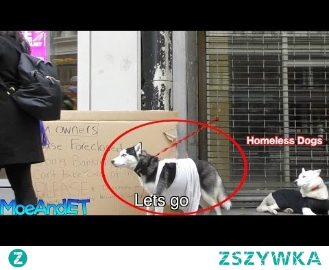 The Freezing Homeless Abandoned Dogs! (Social Experiment)