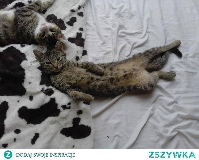 jak wygląda codzienna kocia rutyna? (klik)