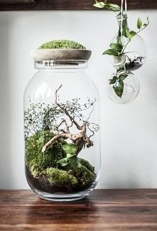 Las w słoju :)