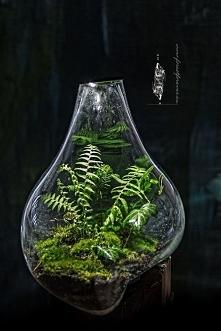 las w słoju ;)