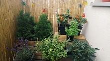 Moj zaczarowany ogrod ;)