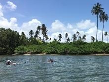 Małpia Wyspa (Cayo Santiago...