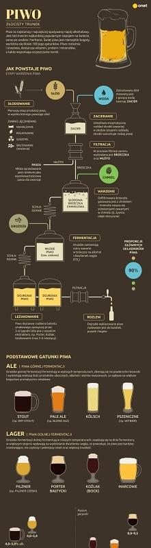 Podstawowe gatunki piwa