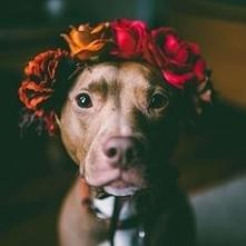 Śliczny pies !