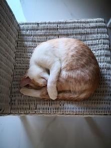 Kocie zakrętasy :)