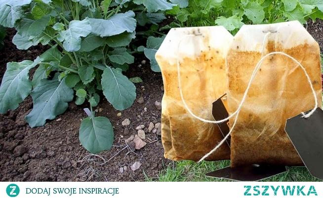 Zakop zużyte torebki herbaty w ogrodzie i obserwuj, co się będzie działo. To cię zachwyci!