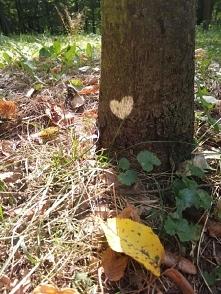 miłość patrzy!