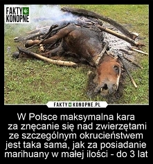 Tracę wiarę w ludzkość, gdy mordowanie zwierząt i znęcanie się nad nimi jest karane tak samo jak posiadanie przy sobie niewielkiej ilości suszu roślinnego, który jest wykorzysty...