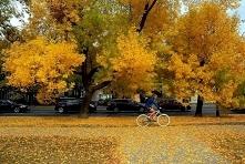 Jesień to wyjątkowo fotogen...