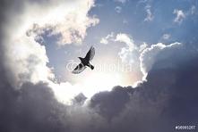 Fototapeta ptak w chmurach