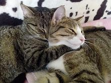 kot robi makijaż - humorystyczne opowiadanie ;) (klik) na końcu posta bonus ;)