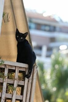 Ciekawski sąsiad, czarno to widzę.