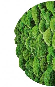 Sie sind die drüne Wände aus lebenden Pflanzen. Mögen Sie sie?