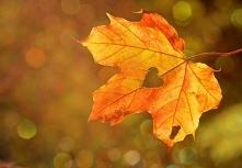 Nadchodzi jesień!
