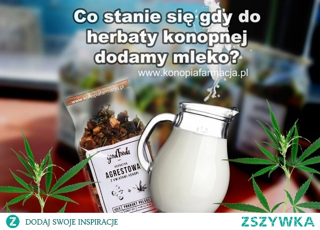 Herbatka konopna ma zielonkawy kolor, który jest spowodowany dłuższym dojrzewaniem roślin i zbiorem w czasie, gdy zawartość CBD jest na najwyższym poziomie.  CBD jest jednym z najczęstszych kannabinoidów występujących w trichomach żeńskiej rośliny konopi. Jest nie-psychoaktywny i nietoksyczny. Ponieważ CBD jest najbardziej aktywne w tłuszczach, zaleca się picie herbaty konopnej z odrobiną tłuszczu jako mleka.  SKŁADNIKI  herbata konopna mleko pełnotłuste 1 szklanka wody ( Do herbaty można również dodać miód)  Po zaparzeniu herbaty konopnej wlewamy do niej ok 2 łyżki stołowe mleka. Tak przygotowana herbata będzie gotowa do spożycia po ok 5-10 minutach.