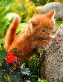 So.cute<3