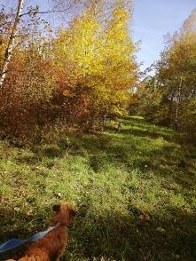 Jesienny spacerek