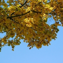 ♧ kolory jesieni ♧