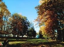 Poznać człowieka to jak poznać drzewo, które stoi w naszym ogrodzie. Niby wiemy jak wygląda, ale czy znamy każdy listek i każdą gałązkę? Zanim poznamy ostatni liść, stare opadną...
