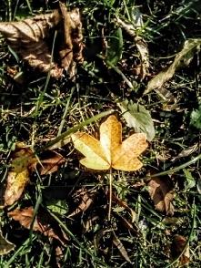 """""""Jesień"""" —   Zanurzać zanurzać się w ogrody rudej jesieni i liście zry..."""