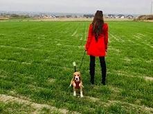 Beagle Love @devills_90