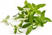 Wkład nasienny Lingot zioła podstawowe cząber