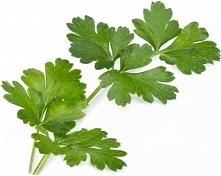 Wkład nasienny Lingot zioła podstawowe pietruszka