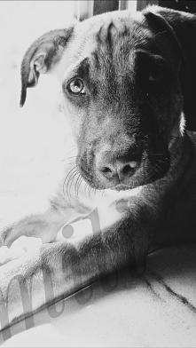 """Dopóki nie kochasz zwierzęcia, część twojej duszy będzie spała """", Anatol..."""