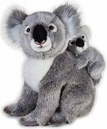 Pluszak National Geographic Koala z dzieckiem szary 37 cm (003-70761)