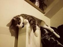 jak sprawić, by kot dobrze się czul w chłodne dni? (klik) :)