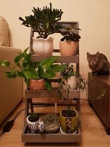 Kwietnik z kotem :)