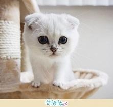 Biały i malutki kociaczek. Ładny?