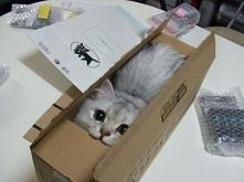 Dobrze jest mieć takie pudełko i schować się choć na chwilę.