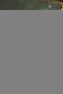 Ptilinopus
