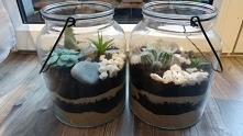 Własnej roboty ogródki w szkle, z sukulentami jako pomysł na prezent świątecz...