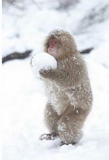 Kto ma śnieg to ma a bałwan musi być ***