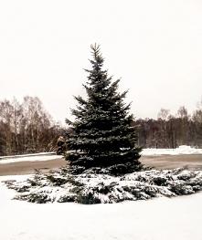 """""""Grudzień"""" -  W grudniu rzadko ptak zaśpiewa w srebrze stoją wszystkie drzewa. Naszą rzeczkę po kryjomu, w nocy lodem okuł mróz. Sanki wezwał i do domu z lasu nam choinkę wniósł..."""