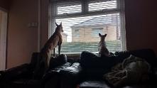 Pypa i Roxy czekające na swojego pana ^^