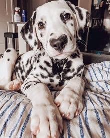 Ooooo so sweet this dog :) ❤