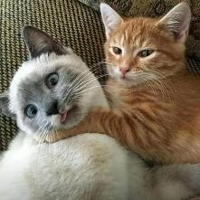 Hahaha new cats ... ^-^