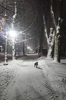 Intensywne opady sniegu najbardziej cieszą Izzy, bo wariatka uwielbia śnieg, zaspy i nurkowanie w nich ;) a jak ona jest zadowolona to ja również i mimo, że nie przepadam za śni...