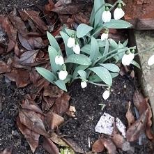 Wiosna wiosna wiosna ach to ty ❤