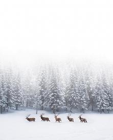 Zimowe inspiracje;)