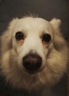 Moja psinka <3